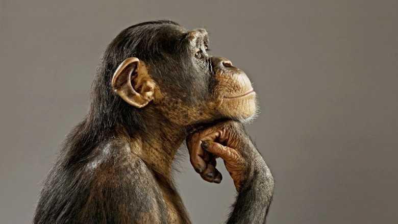 Est-ce que les animaux sont des humains ?