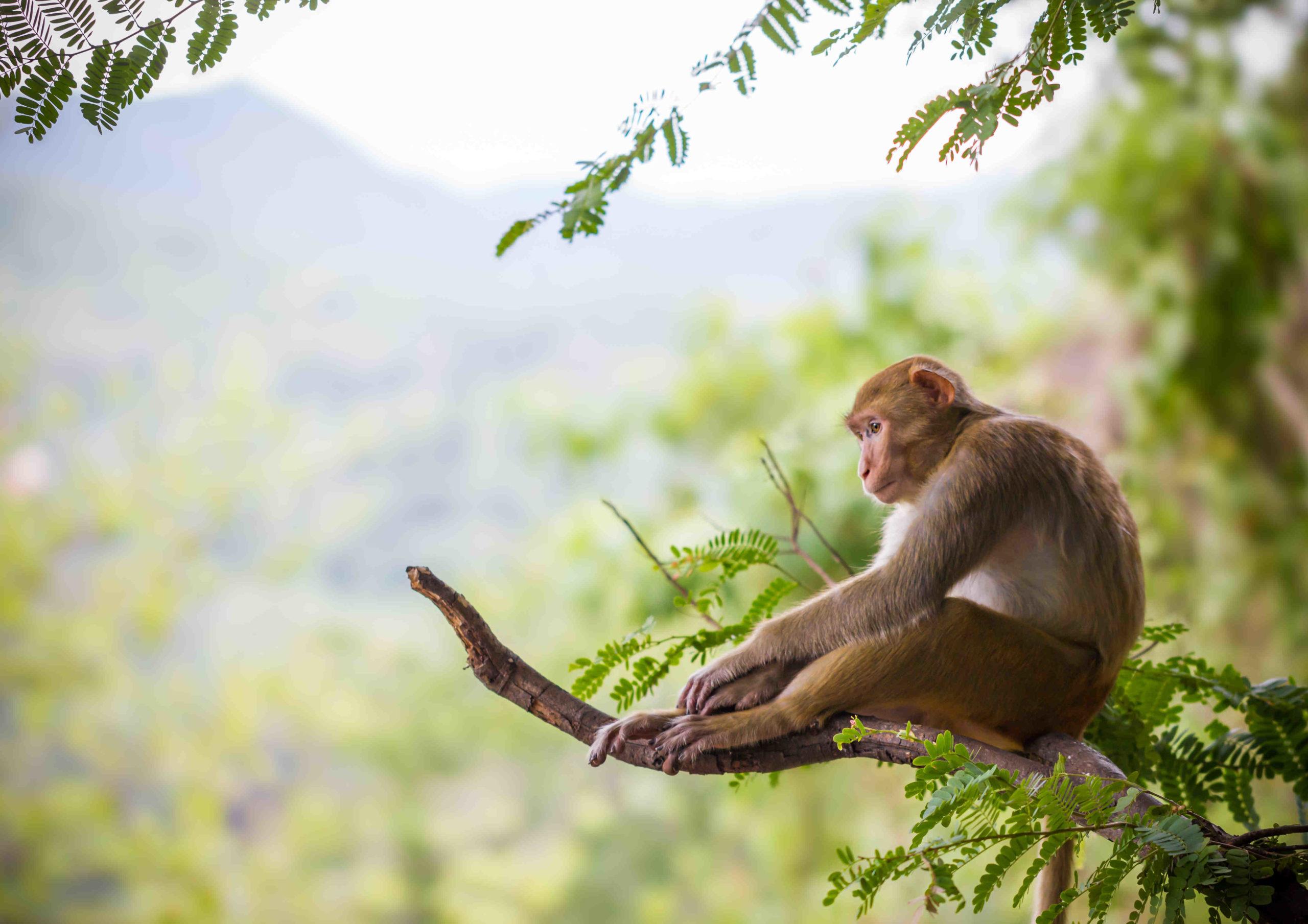 Quel est l'animal le plus rare au monde?